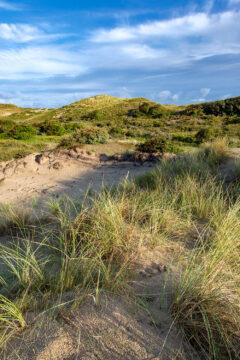 Landschap met zanderige duinhellingen, helmgras en duinstruweel in het natuurgebied Meijendel bij Wassenaar door Ronald van Wijk